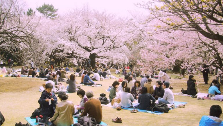 ស្វែងយល់ពីពេលវេលាដែលផ្កា Sakura រីកនៅ Tokyo ក្នុងឆ្នាំ ២០១៩